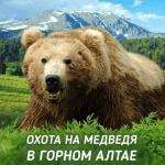 Горный Алтай | Охота на бурого медведя | 2018