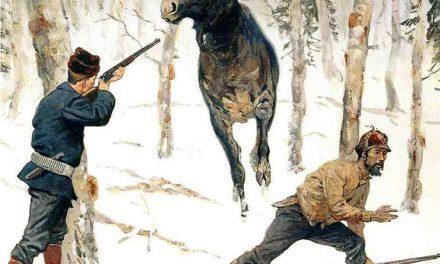 Лось — мечта любого охотника…!