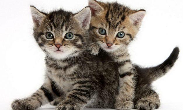 Коты — воители )))