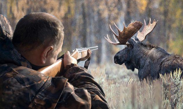 Сроки осенней охоты в 2018 году