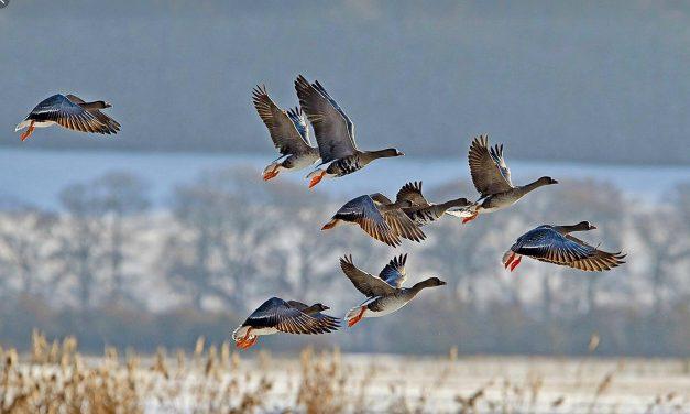 Правила охоты 2019 | Актуальные советы охотникам