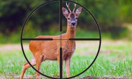 УК ст. 258 | Незаконная Охота | Новая редакция и комментарии