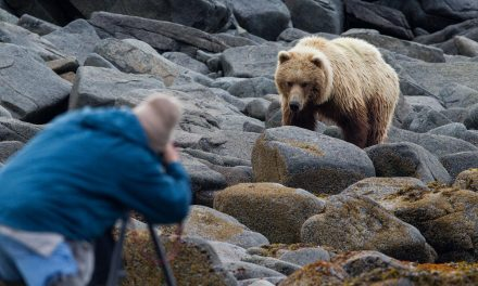 Экс-депутат Госсобрания (Ил Тумэн) Александр Крылов стал жертвой медведя в Оймяконском районе