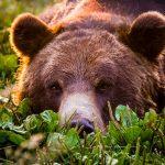 Охота на медведя #1: Медведь зашёл в деревню