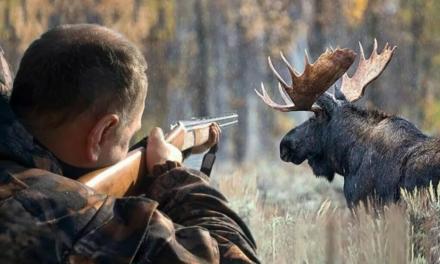 Правила проведения коллективной охоты в РФ